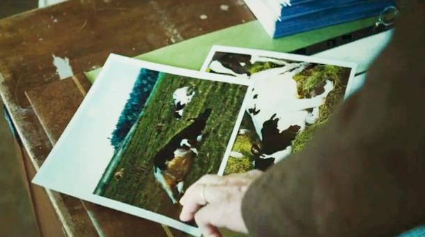 Les photos des vaches mortes qui vont provoquer la polémique dans toute la ville. Photo : DR