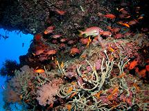 La faune et la flore marines sont utilisés dans les recherches pour la médecine. Crédit: Bernard Banaigs