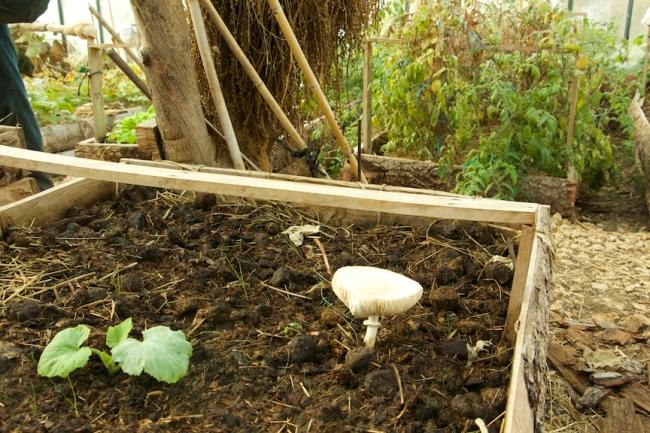 Des champignons qui poussent, signe de bonne santé du sol. Crédit : Loris Bavaro.