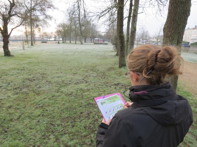 Observation oiseau parc S.Fagart