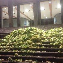 Des agriculteurs ont déposé des choux devant la mairie de Brest pour exprimer leur mécontentement. (Crédit : Twitter/@AnnceCeJuillet)