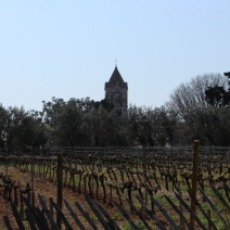 Un domaine de huit hectares de vignes est cultivé et travaillé par les moines et les ouvriers agricoles de l'île de Saint-Honorat. (Crédit photo: Maxime Bonnet)