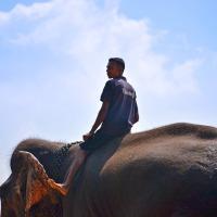 Ne montez plus à dos d'éléphant