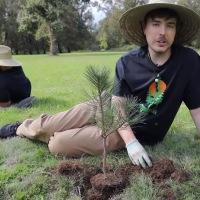 #TeamTrees : Un youtubeur américain lance une collecte pour planter 20 millions d'arbres